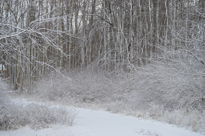 011216_Snow Coated Pathway