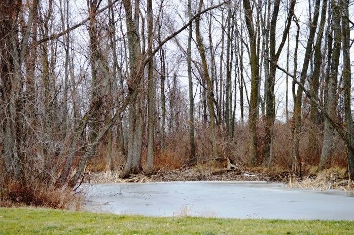 011616_On Frozen Pond