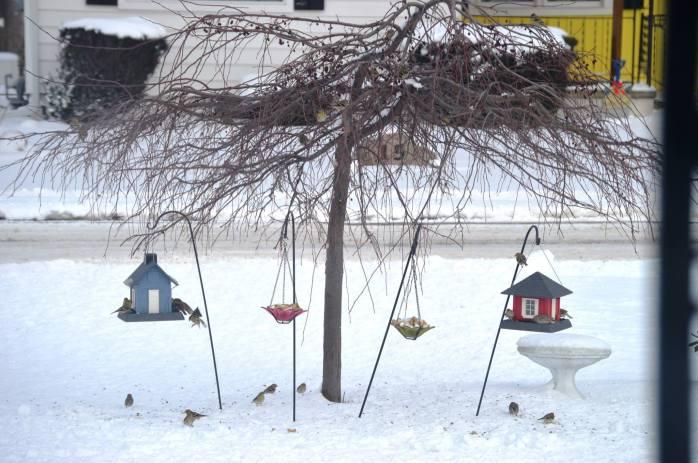 021516_Hangry Birds