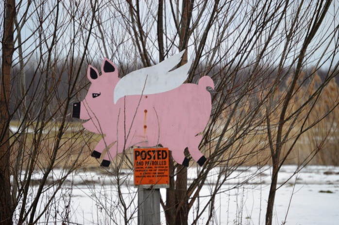 022116_You May Hunt Here When Pigs Fly