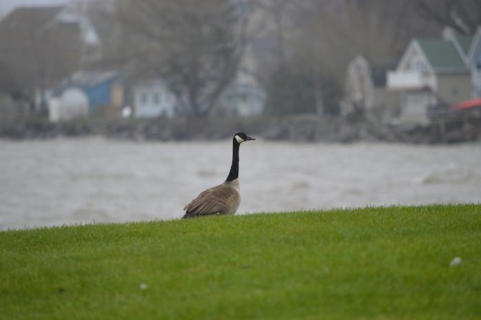 050116_Rainy Day at the Lake