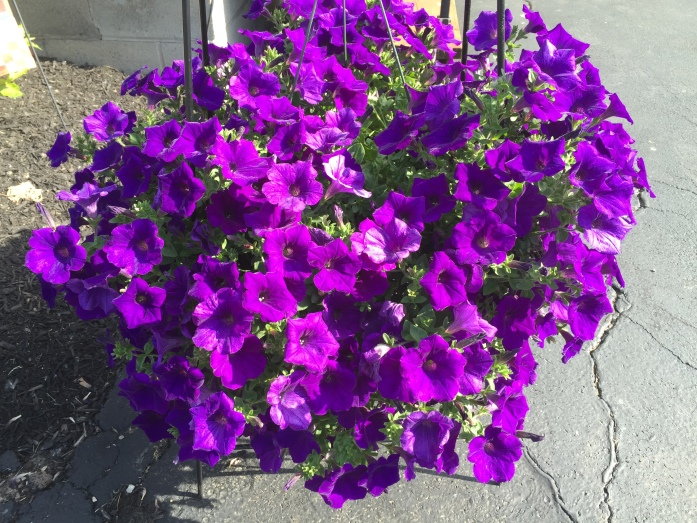 060416_Purple Explosion