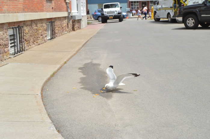 Even the seagulls love the food