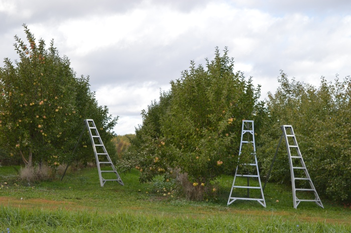 101316_apple-season