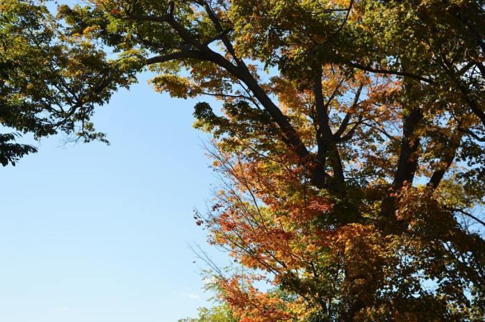 101416_autumn-leaves