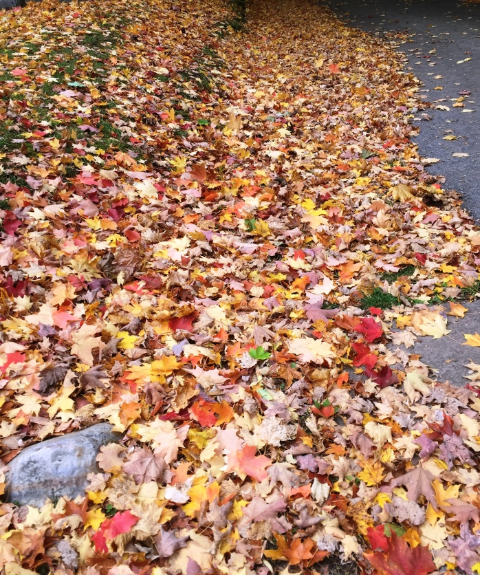 102316_time-to-rake-the-leaves