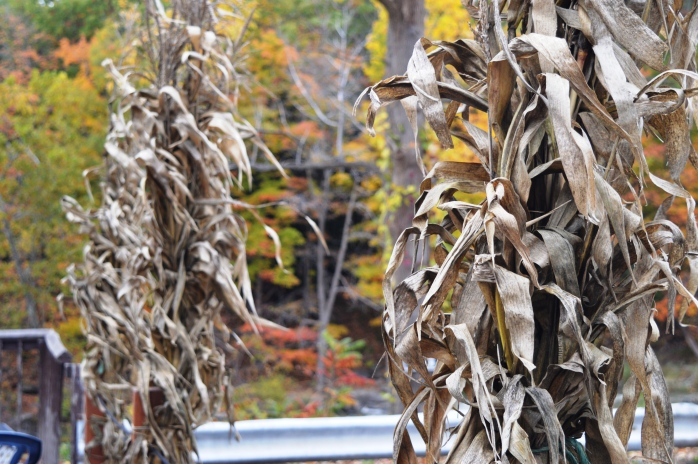 102416_corn-husks-at-indian-falls
