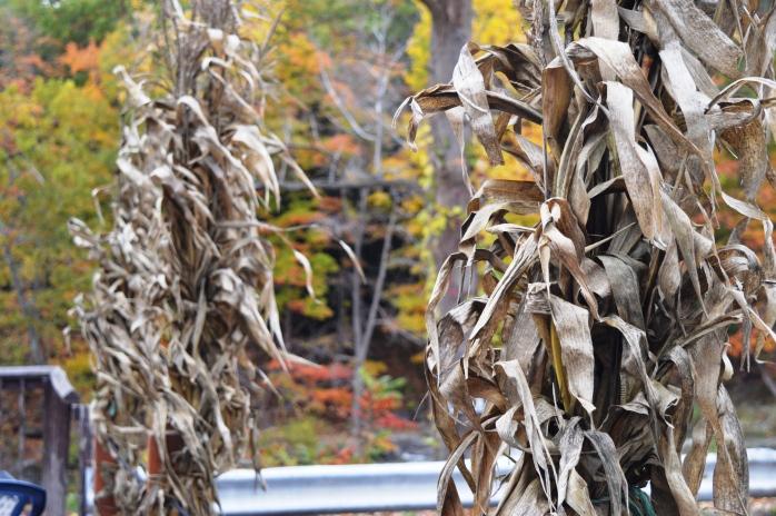 102416_corn-husks-at-indian-falls