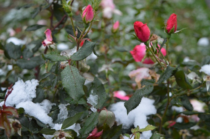 102716_first-snow_oh-crap