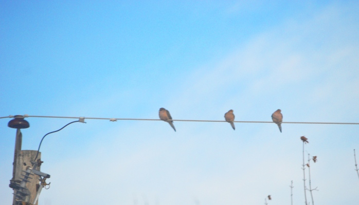 122016_birds-on-a-wire