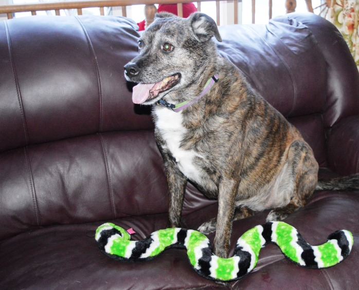 122916_mom-got-me-another-new-toy