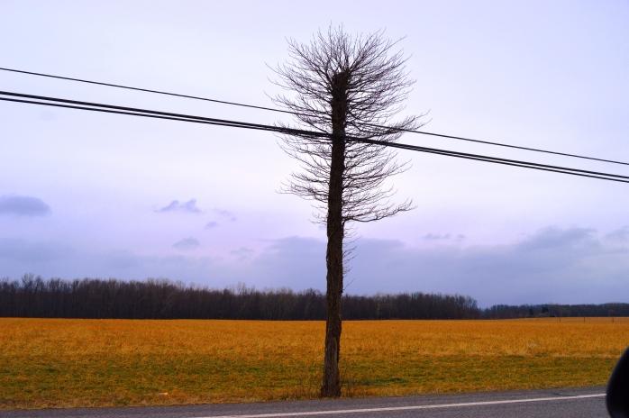 010517_runner-up_lonely-odd-tree