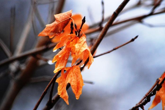 011217_hanging-on_leaf