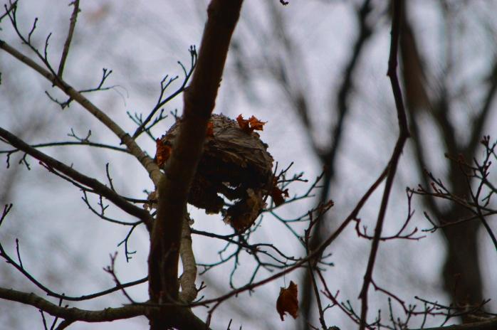 011317_abandoned-nest