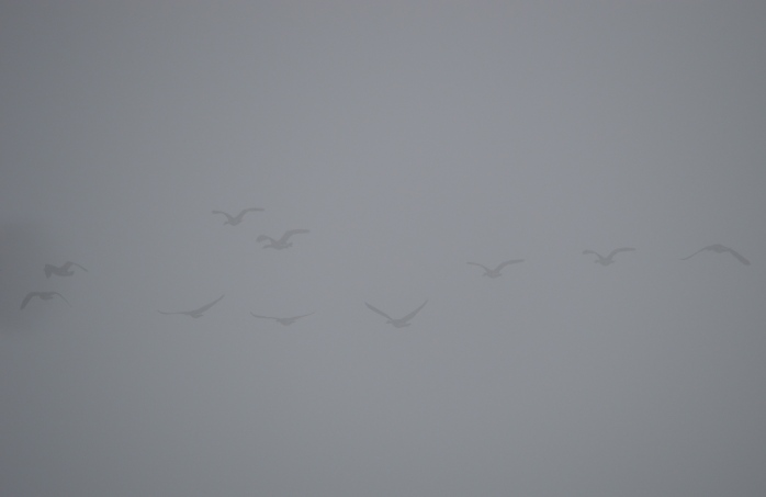 012217_flying-in-a-fog