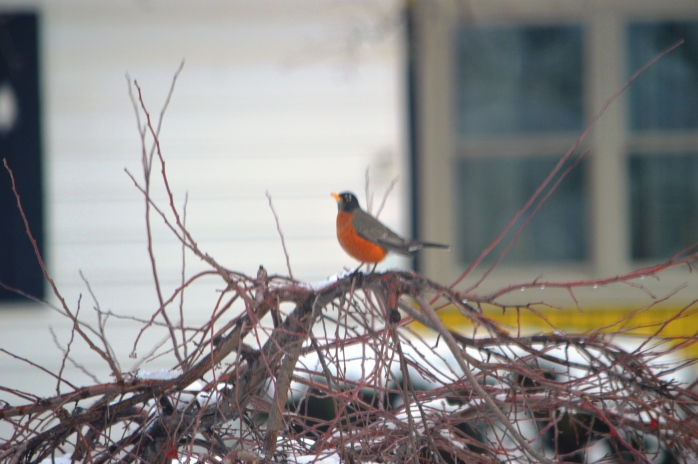 012517_january-morning-visitor