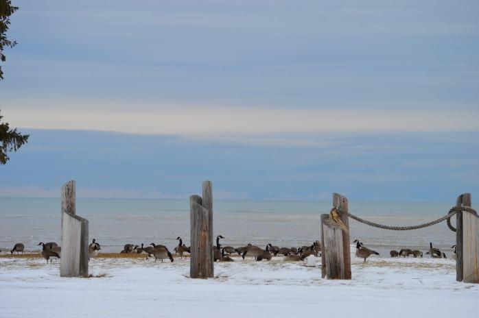 020617_geese-at-the-lake