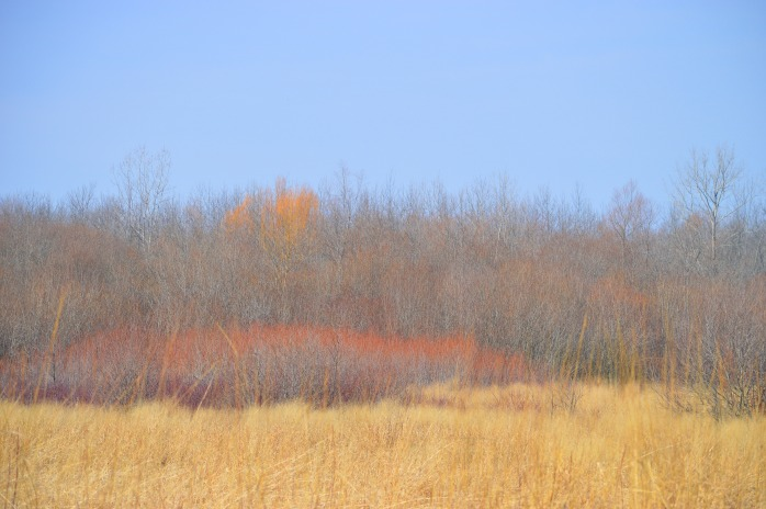 022217_sun-colored-field