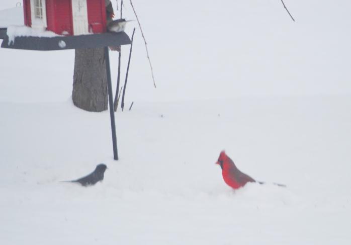 030417_snow-birds_contrast