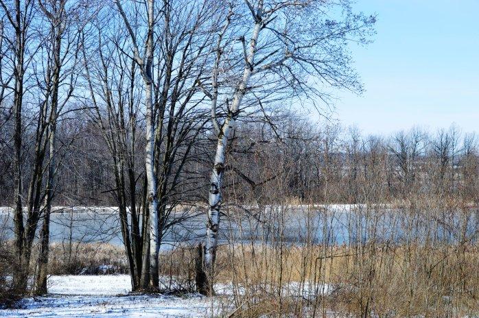 030517_peaceful-marsh-overlook